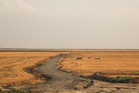 تالاب گلفشان «قارنیارق» در استان گلستان10