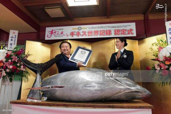 عکس/ گرانترین ماهی دنیا فروخته شد