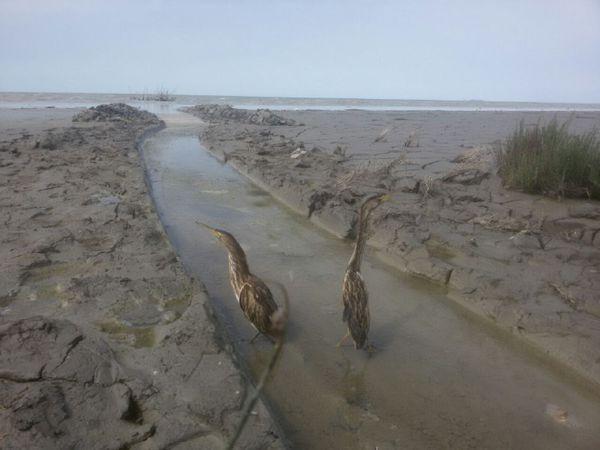 رهاسازی پرندگان در حاشیه خلیج گرگان