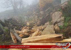 قطع درختان جنگل های روستای کی یو + تصاویر
