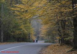 جلوه پاییز در مسیر درازنو کردکوی+تصاویر
