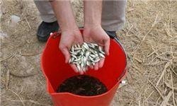 رهاسازی 285 میلیون قطعه انواع بچه ماهی به دریا