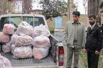 کشف بیش از ۷۰۰ کیلوگرم گوشت گراز در استان گلستان