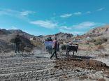 ۵۴۰ هزار هکتار از اراضی استان گلستان زیر کشت پاییزه رفت