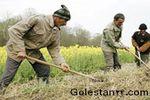 موانع و مشکلات کشاورزی در استان گلستان