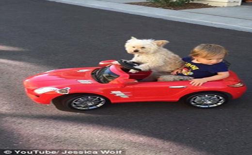 این سگ یک راننده شخصی است+ تصاویر