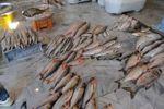 بازار داغ ماهی فروشان بندرترکمن در روزهای پایانی سال+عکس