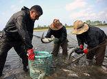 تولید سالانه ۴۰۰ تن انواع ماهی در آب بندانهای لیوان غربی