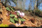 عکسهای گلچین شده از جنگل گلستان در فصل زمستان