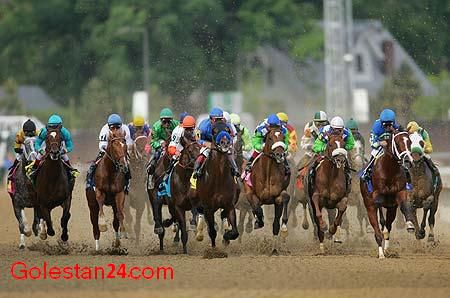 382horse_race